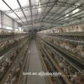 La couche la plus rentable des cages à volailles pour les fermes du Kenya