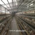 Предоставить Австралия с самым выгодным слой яйцо курица клетка