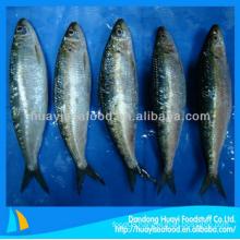 price frozen sardine fish varieties