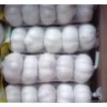 Nouvelle récolte normale l'ail frais en Chine vente chaude