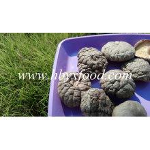 Shiitake seco / seta de shiitake lisa y seca