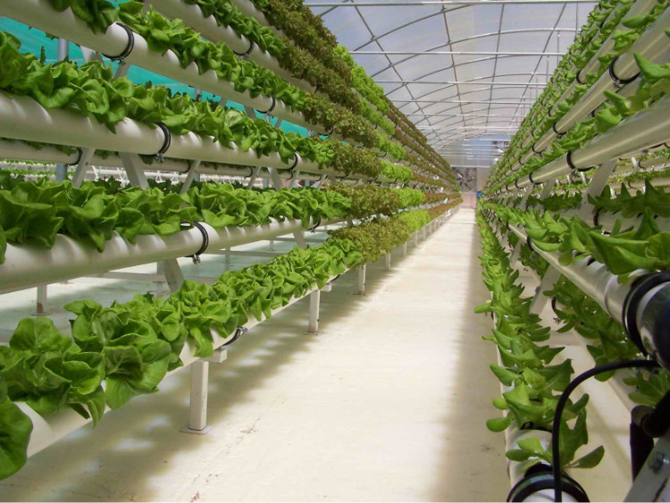 Large Tunnel Hydroponics