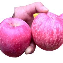 fuji price fresh fuji apples fresh red apple China fuji