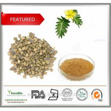 Haute pureté 100% naturel Sapulines de poudre d'extrait de Tribulus Terrestris 60% Protodioscine 40%