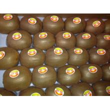New Crop Good Quality Fresh Kiwi