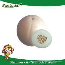 Suntoday простой комплектации белой корочкой с белой мягкой плоти азиатской овощной гибрид F1 дыни органические семена японский(18012)