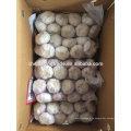 Normaler weißer Knoblauch 10kg pro Karton 2017 frischer Knoblauch Jinxiang