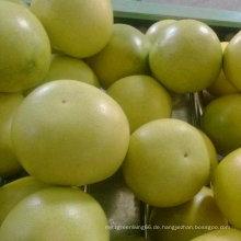 Exportierte Standardqualität von frischem Honig Pomel