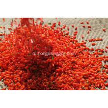 New+harvest+Ningxia+organic+natural+dried+goji+berries