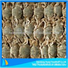 yummy fresh frozen mud crab with best price