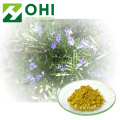 Rosemary Leaf Extract bột Carnosic bột