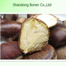 Suministro 100% maduro de castaña fresca Fromchina