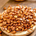 Wholesale Agriculture Products Pine nuts natural nuts