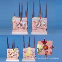 Dog Skin Medizinisches Anatomisches Modell für die Lehre (R190113)