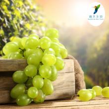 Cosmetics Ingredients Skin Whitening Grape Skin Extract P.E. 5% Resveratrol 30% Polyphenol