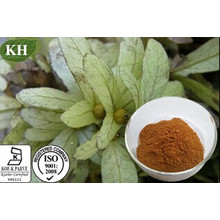 Engelhardtia Extracto de Roxburghiana Astilbina 80%