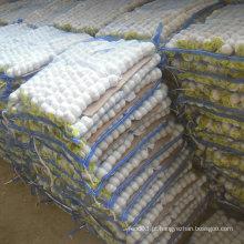 Nova colheita de alho chinês branco puro em saco pequeno