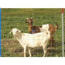 Clôture de mouton / de bétail de prairie galvanisée