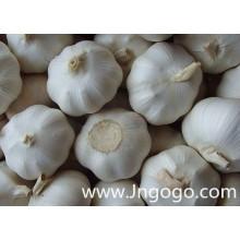 Nova colheita de alho branco fresco de alta qualidade