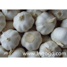 New Crop Fresh High Quality White Garlic
