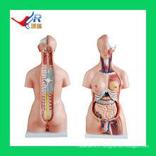 HR-204 85CM Unisex Torse Model 85cm (20parts), Hommes Femmes Organes