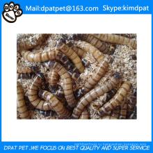 Оптовая сушеные мучные черви для корма