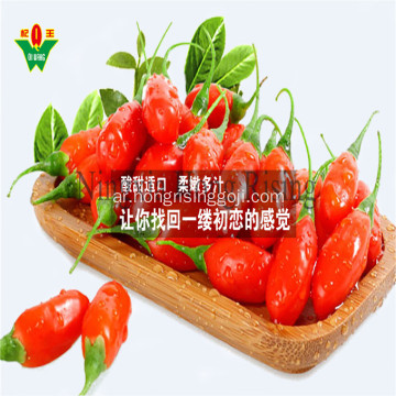 Bio tibetan plateau goji berry natural wolfberry