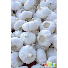 Alho / alho fresco / alho fresco Jinxiang