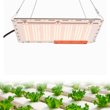 LED Grow Light hidropônico com chips Samsung LM301B