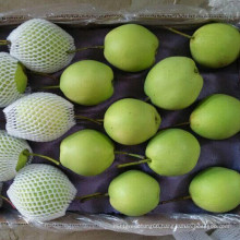 Fresh Green Shandong Pear for India