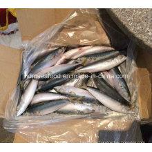 (7-8PCS / кг) W / R Новая рыба Тихоокеанская скумбрия