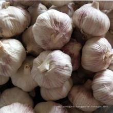 garlic keeper import chinese red purple garlic price in china
