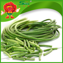 High quality Garlic sprouts green vegetables for health