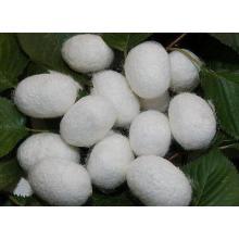 (Silk Peptide) -High Quality Cosmetic Grade Silk Peptide