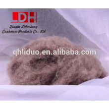 washed and carded camel cashmere wool fiber