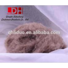 Fibra de lã de caxemira de camelo lavada e cardada