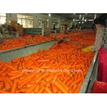 Dados de zanahoria congelados