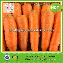 new crop fresh carrot