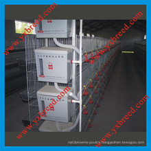 Hot Galvanized Automatic a-Type Broiler Chicken Cage (H4L80)