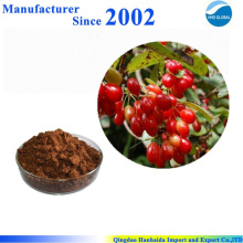Hot selling high quality pure nature Cornus extract , Cornus powder , Cornus powder extract