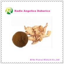 Alta Qualidade Natural Extrato Vegetal Radix Angelica Dahurica Pó