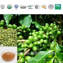 Extracto a base de hierbas de grado superior Polvo de extracto de grano de café verde de la muestra libre con precio de fábrica