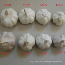 Suppy toutes les spécifications normales blanc ail frais en Chine