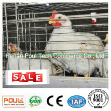 Broiler Chicken Cage Wire Mesh