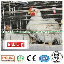 Broiler Chicken Cage Wire Mesh