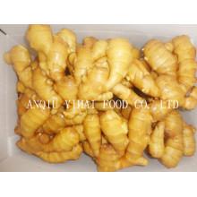 Anqiu Fresh Ginger avec une bonne qualité