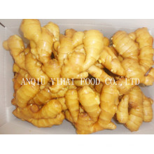 Anqiu Fresh Ginger with Good Quality