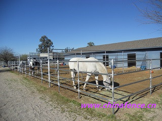 Horse Fence Galvanized