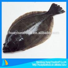 Flounder supplier
