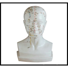 Life-Size Acupuncture Head Model (M-2-L)